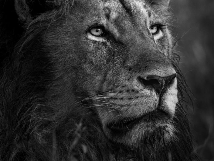 King Nguvu